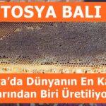 Tosya'da Dünyanın En Kaliteli Ballarından Biri Üretiliyor ( Tosya Balı )